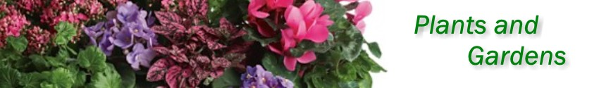 Green plants, blooming plants and dish gardens delivered in Omaha from Janousek Florist and Greenhouses