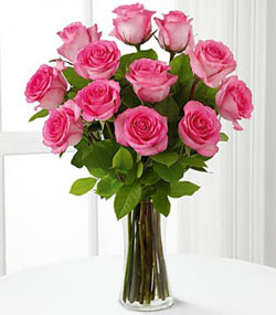 12 Hot Pink Roses Arranged